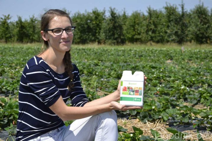Poprawa odporności roślin i naturalne żywienie truskawek